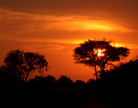 Fires of Sunset - Okavango Delta, Botswana