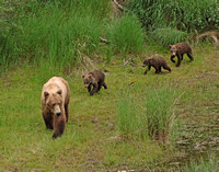 Family Outing - Katmai NP, Alaska